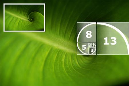 La seqüència Fibonacci té molta relació amb la secció àuria per les seves proporcions harmòniques. Aquests nombres s'utilitzen, entre altres usos, per a mesurar el cos de les tipografies i determinar la posició dels blocs de text. Nota legal: imatge sota domini públic procedent de wikimedia commons. Publicada pel Grupo Firenze (2008).