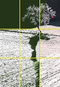 Creació digital d'Alba Ferrer Franquesa; es regeix per una estructura interna de 2/3 en format vertical. Nota legal: © UOC. Creative Commons Reconeixement Compartir Igual 3.0-es. Ferrer, A. Demanar pomes a l'ametller (2006).