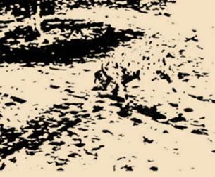 Imagen experimental para mostrar el fenómeno de la emergencia perceptiva. Autor: R. C. James. Usado experimentalmente por D. Marr (1982), Lindsay&Norman (1977) y R. L. Gregory (1970)