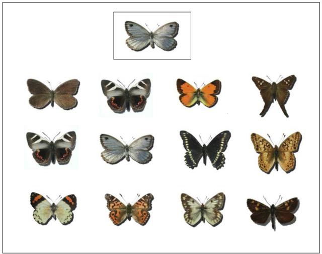 Fuente: http://surmagico.cl/el_color_de_las_mariposas.htm