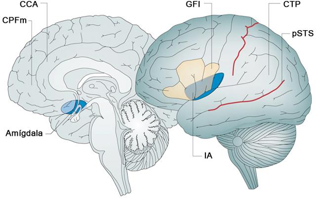 CPFm = Córtex prefrontal medial; CCA = Córtex cingulado anterior; GFI = Giro frontal inferior; CTP = Conjunción temporoparietal; pSTS= Extremo posterior del surco temporal superior; IA= Ínsula anterior.