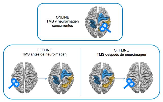 Figura 12. Aplicación en línea y sin conexión de TMS y neuroimagen